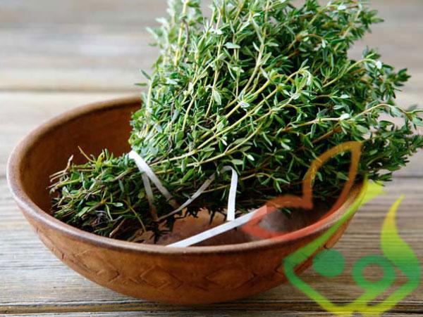 خواص گیاه دارویی آویشن