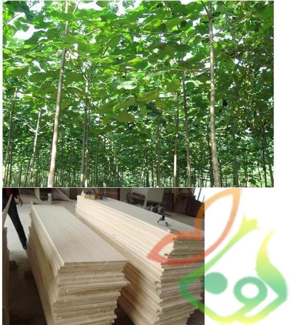 درخت صنعتی پالونیا