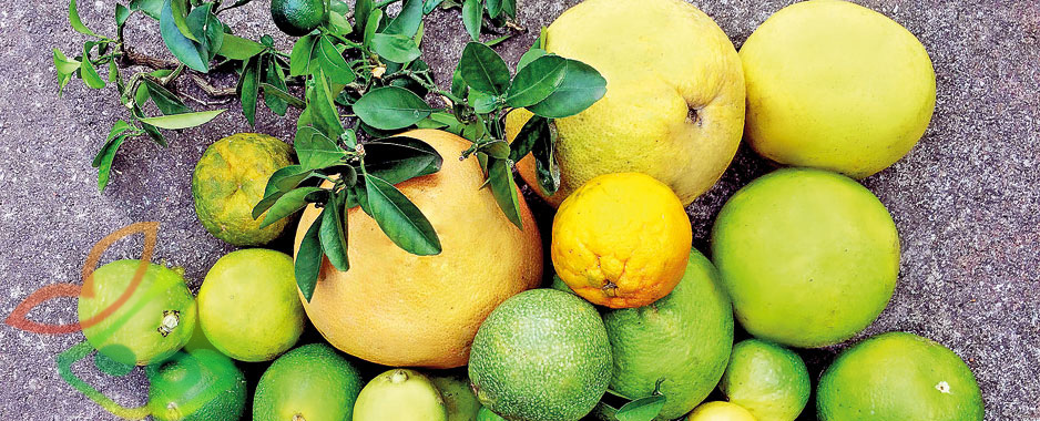 انواع درخت لیمو ترش