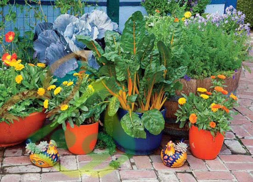 انواع گل و گیاه