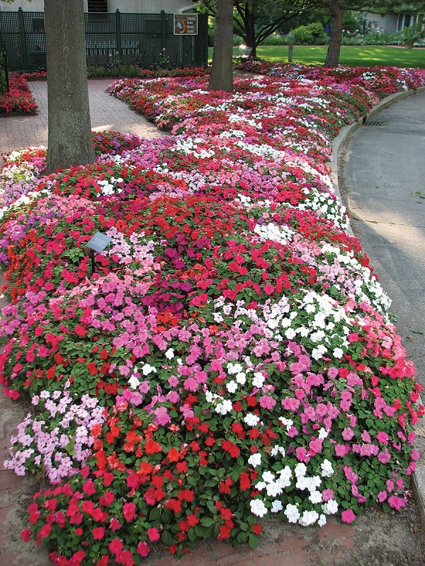 گل امپیشن حنا