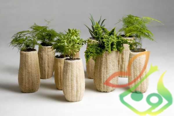 استفاده از گیاه لیف لوفا