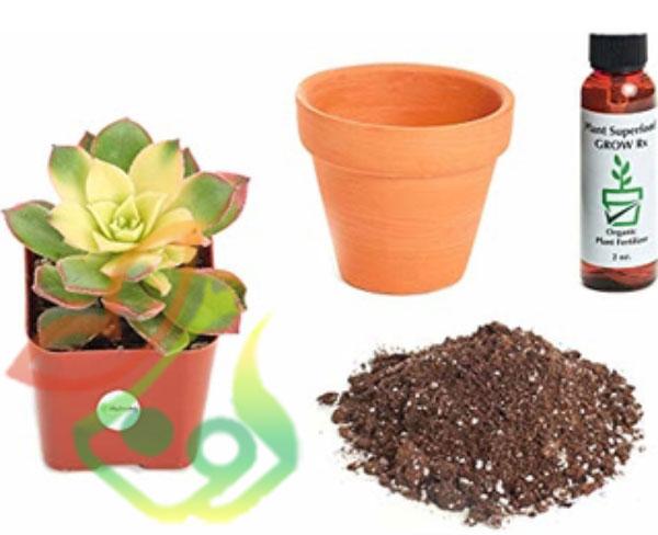 پرورش گیاه آئونیوم