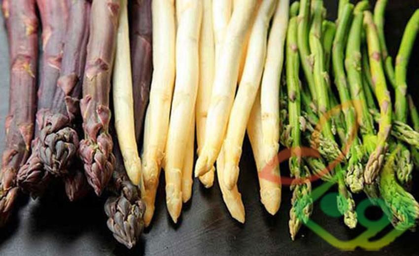 انواع گیاه مارچوبه