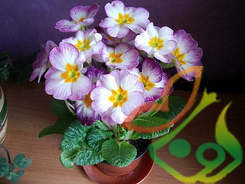 بازار فروش گل