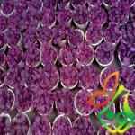 خرید گل آشلانتوس