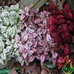 قیمت گل سنگ