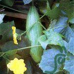 بهترین انواع لیف گیاهی