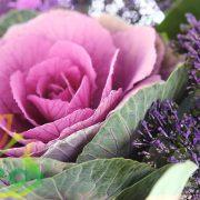 انواع گل کلم زینتی