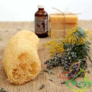 گیاه دارویی لیف لوفا