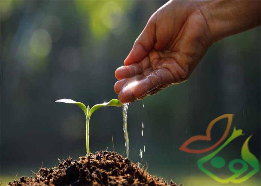کاشت بذر گل بنفشه