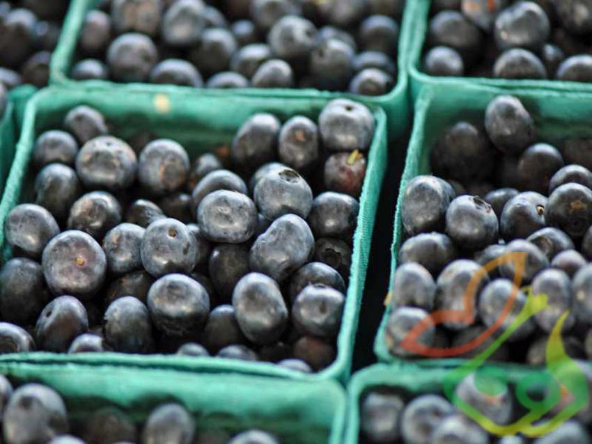 میوه بلوبری