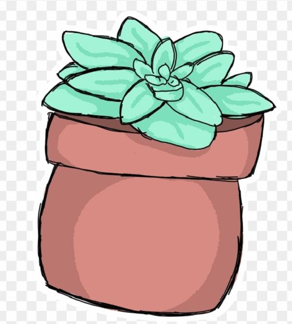 گیاه آئونیوم سبز خورشیدی