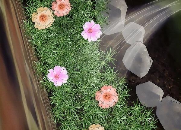 آبیاری گل ناز